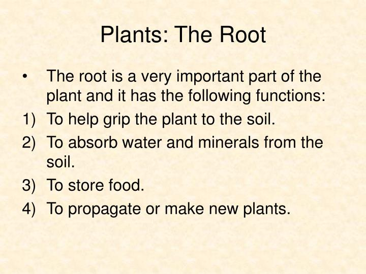 Plants the root