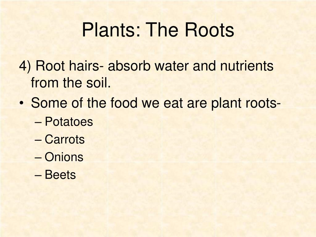 Plants: The Roots
