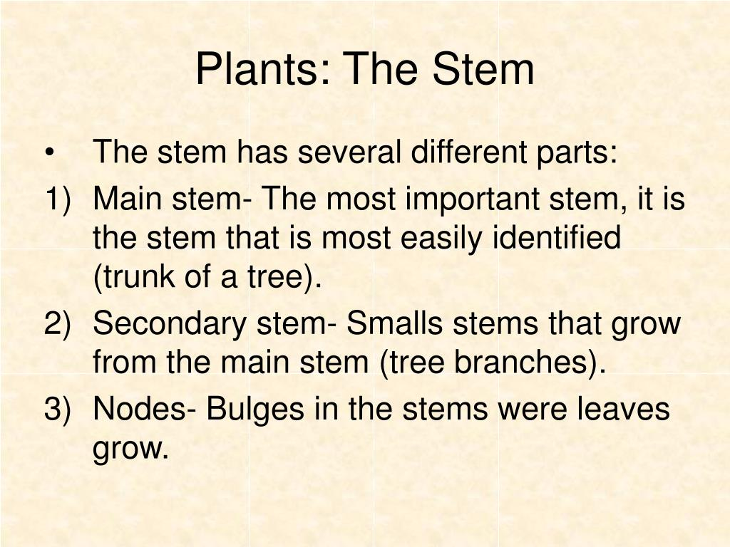 Plants: The Stem