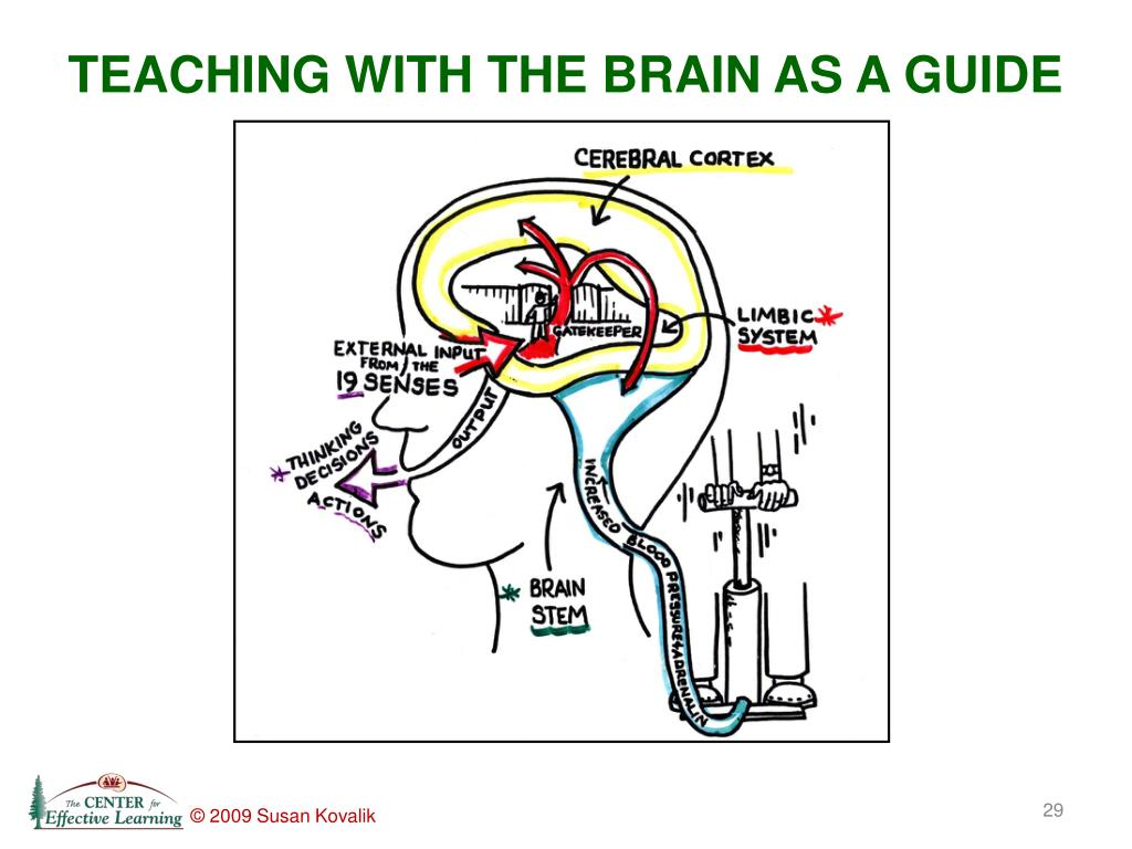 TEACHING WITH THE BRAIN AS A GUIDE