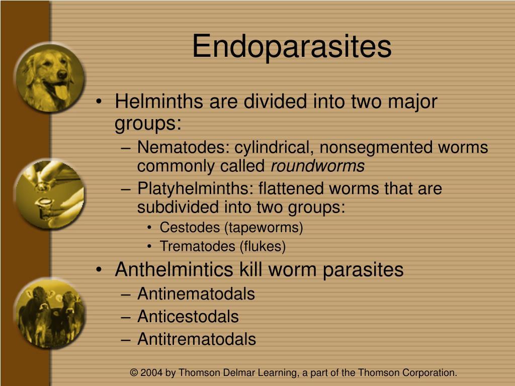 Endoparasites