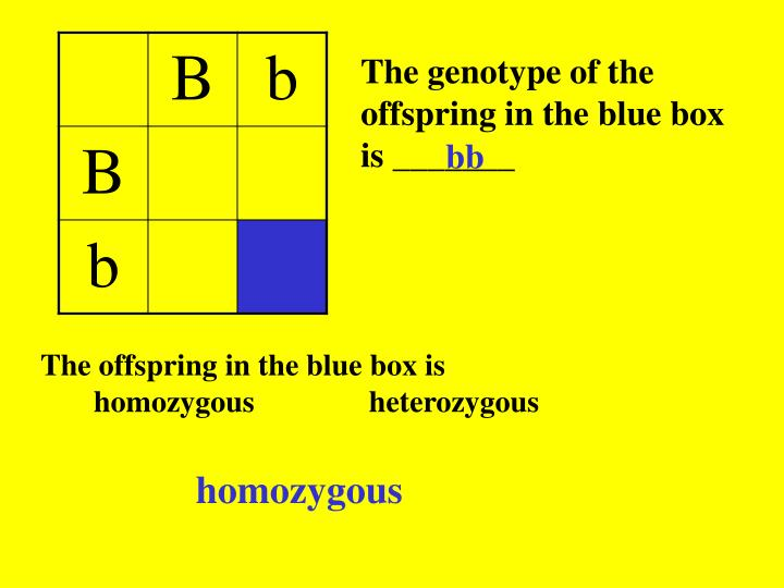 The genotype of the offspring in the blue box is _______