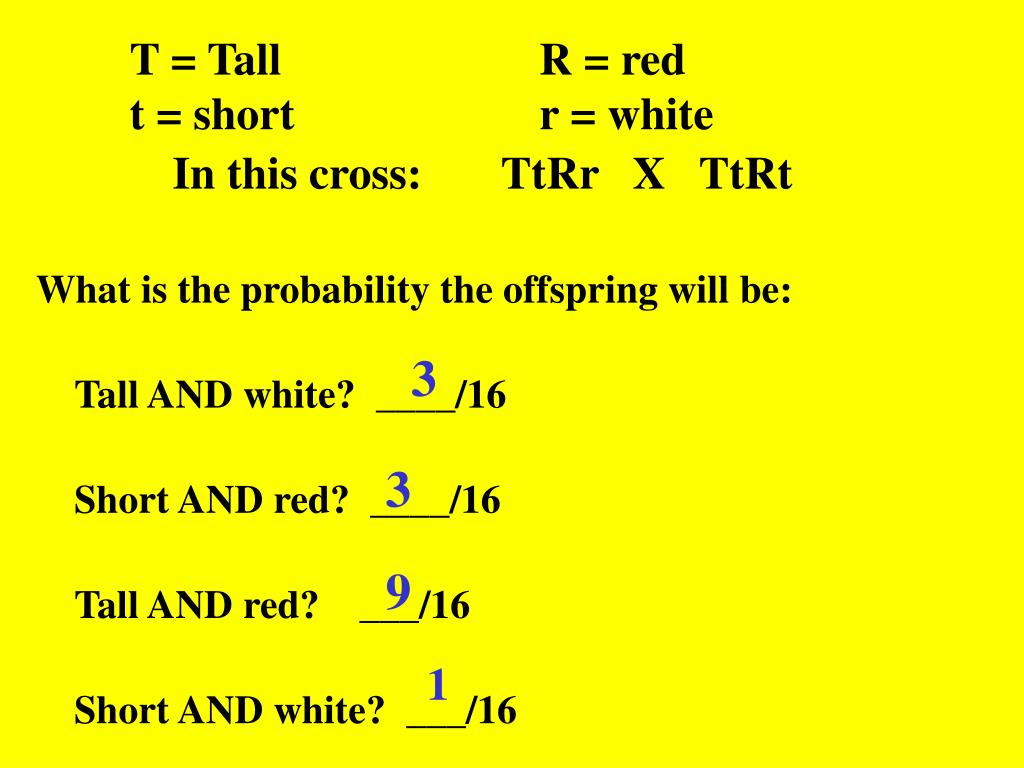 T = Tall			R = red
