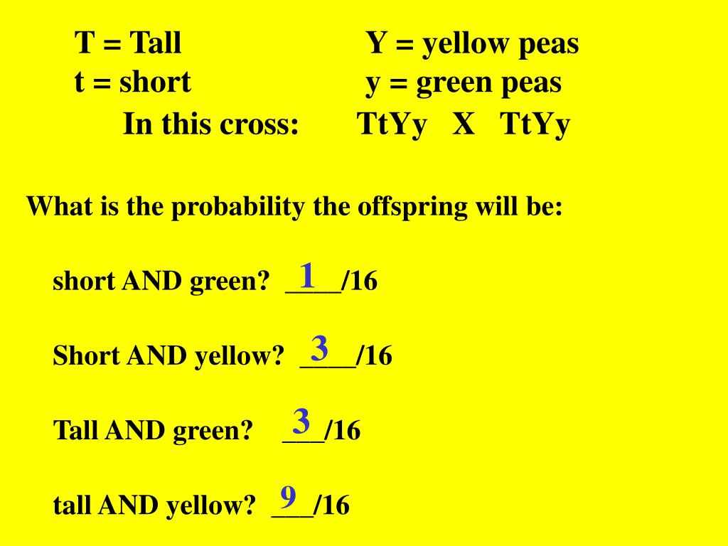 T = Tall			Y = yellow peas