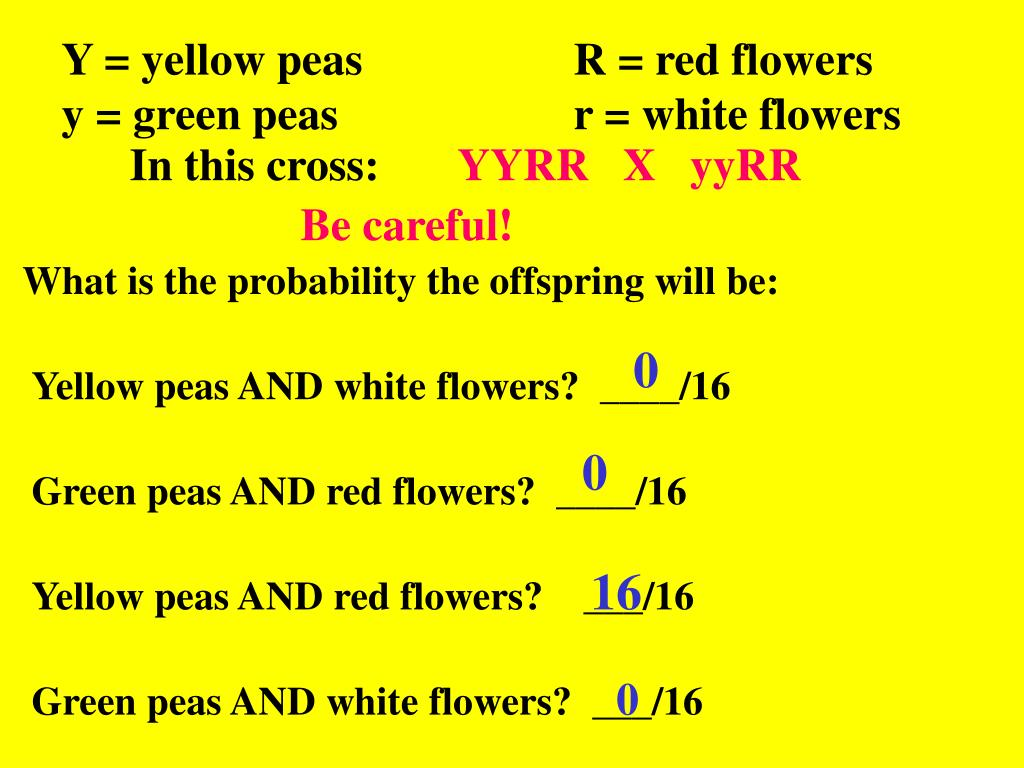 Y = yellow peas			R = red flowers