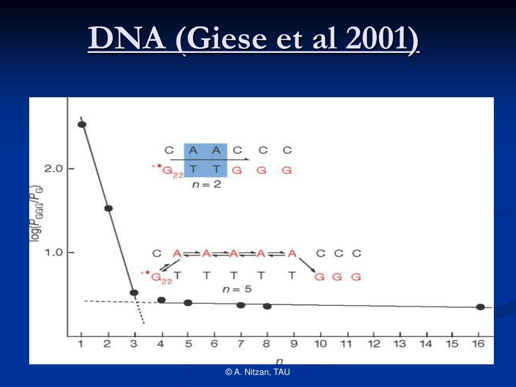 DNA (Giese et al 2001)