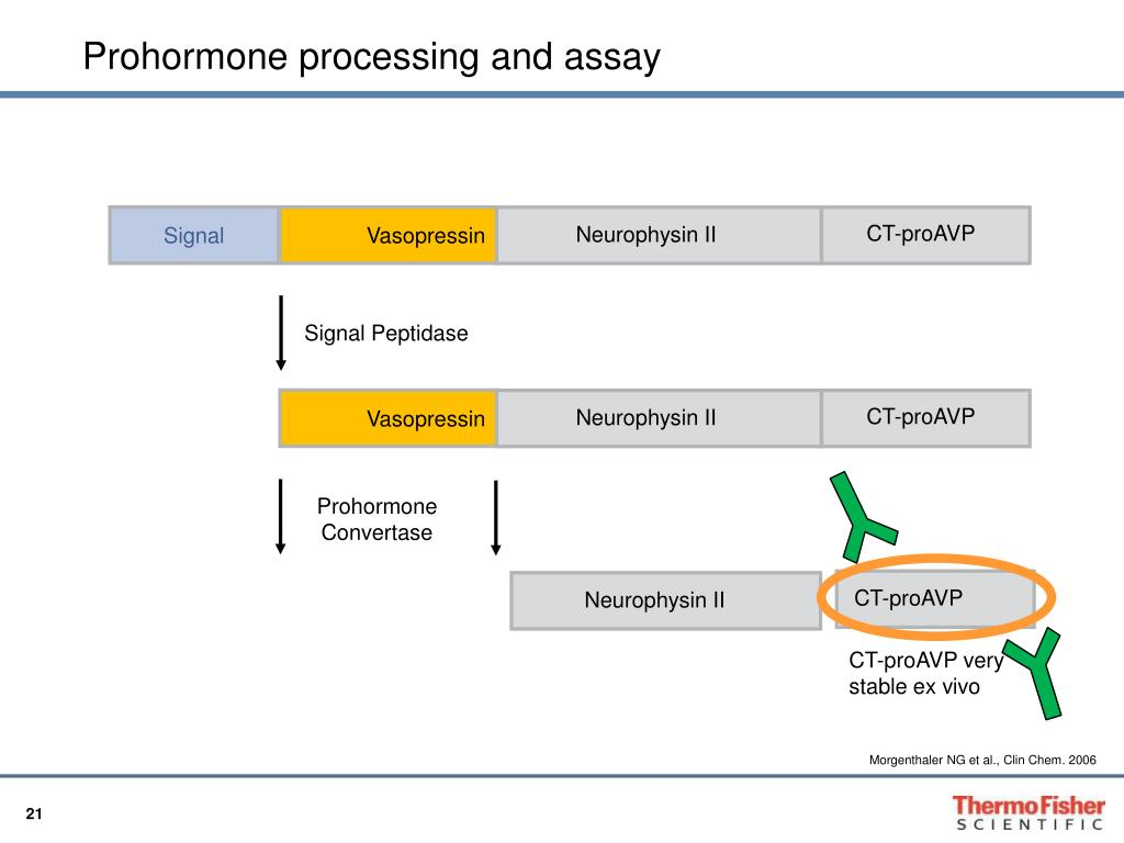 Signal Peptidase