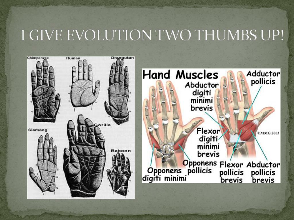 I GIVE EVOLUTION TWO THUMBS UP!