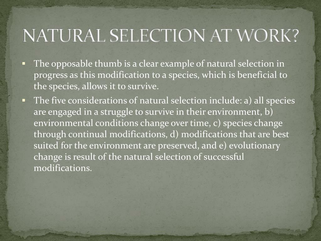 NATURAL SELECTION AT WORK?