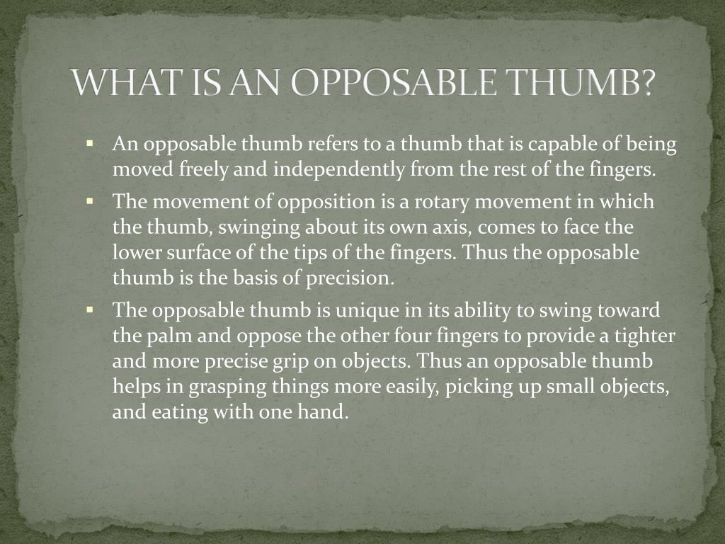WHAT IS AN OPPOSABLE THUMB?