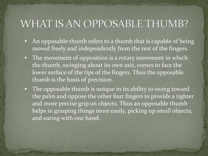 What is an opposable thumb