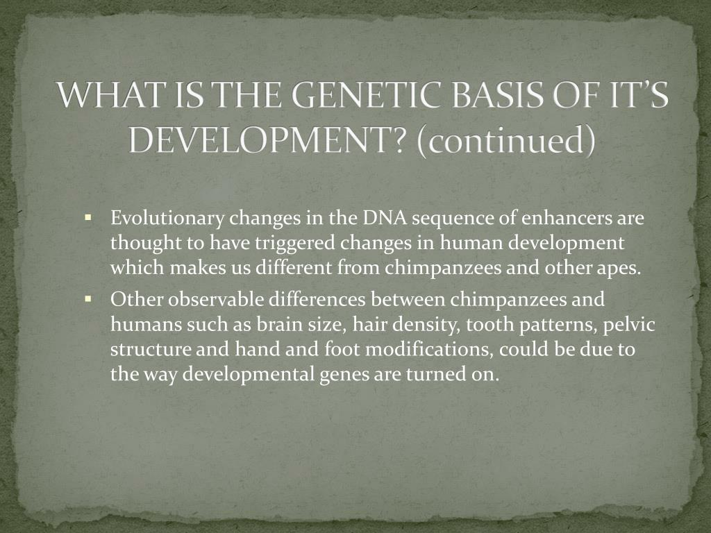 WHAT IS THE GENETIC BASIS OF IT'S DEVELOPMENT? (continued)