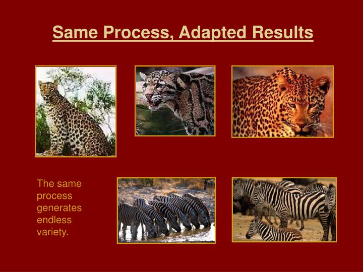 Same Process, Adapted Results