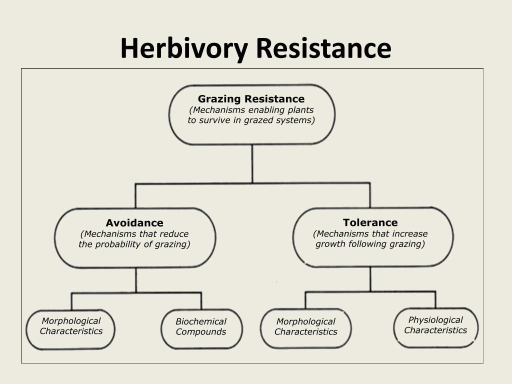 Herbivory Resistance