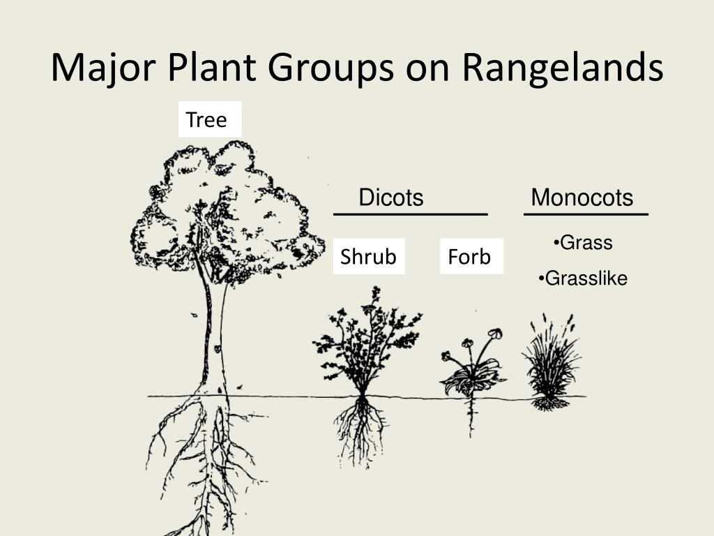 Major Plant Groups on Rangelands
