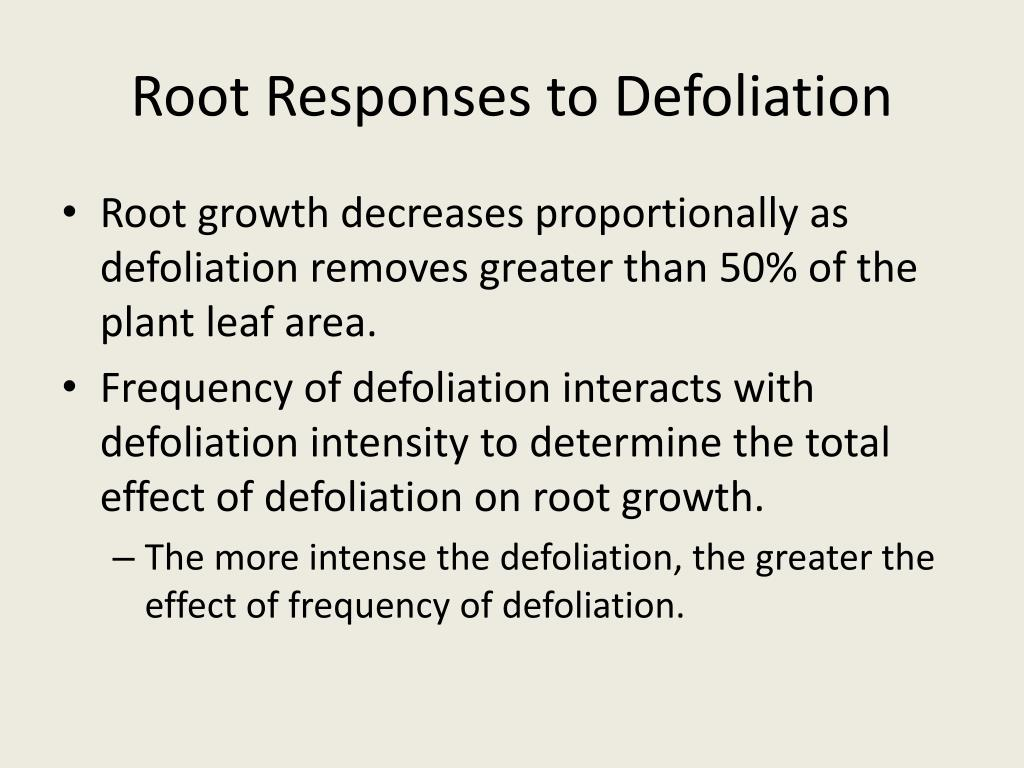 Root Responses to Defoliation