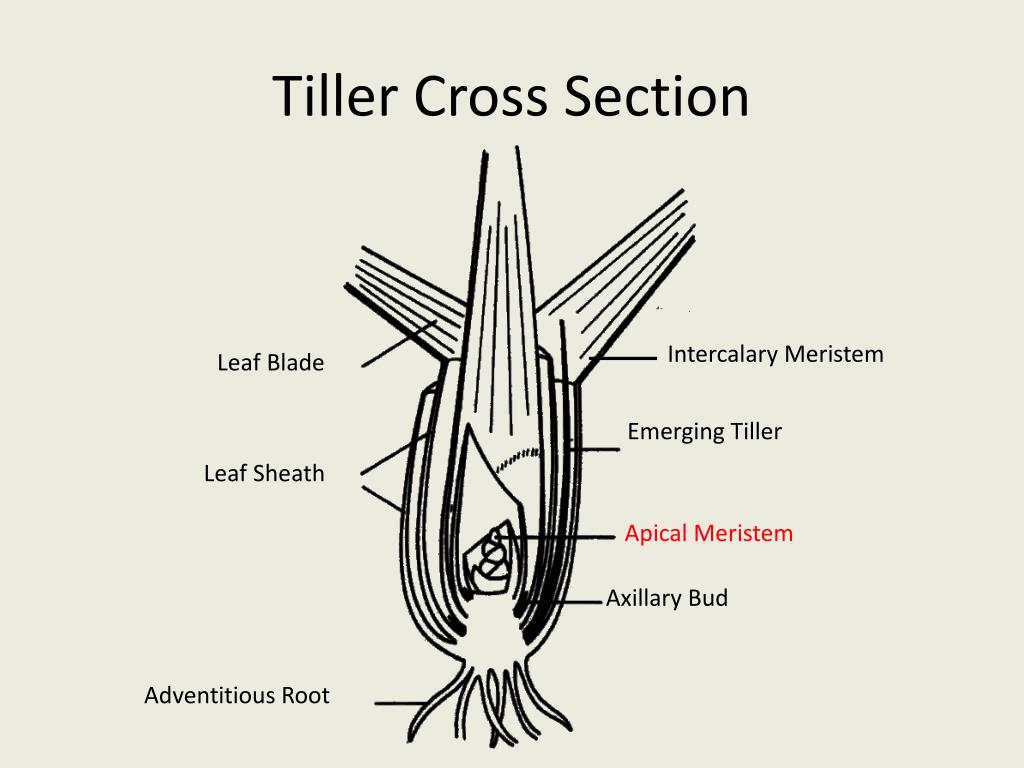 Tiller Cross Section