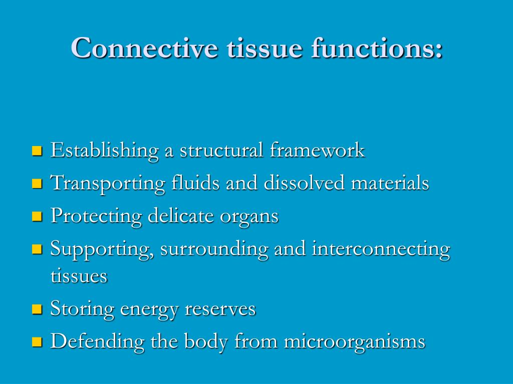 Connective tissue functions: