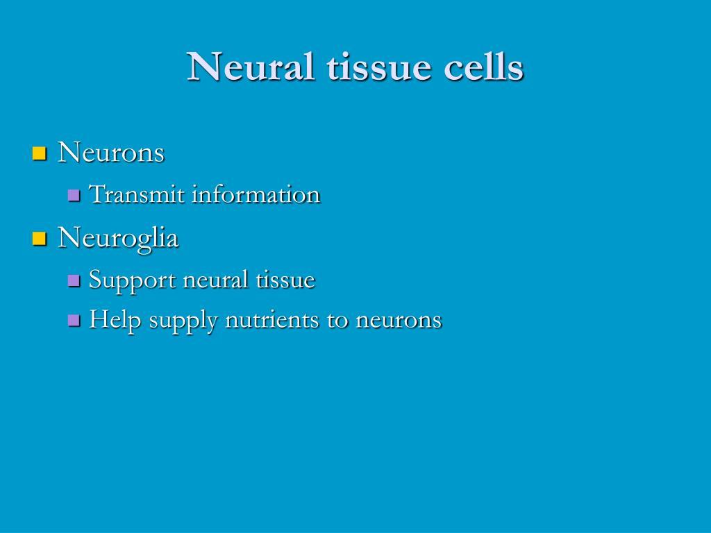 Neural tissue cells