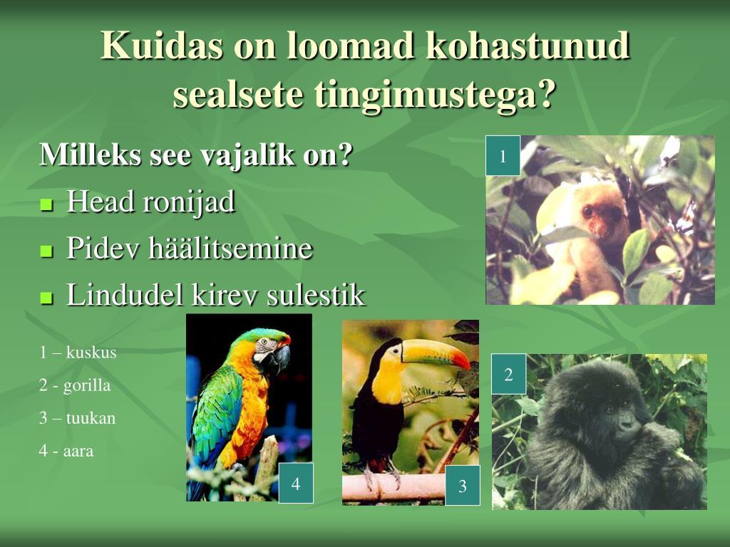 Kuidas on loomad kohastunud sealsete tingimustega?