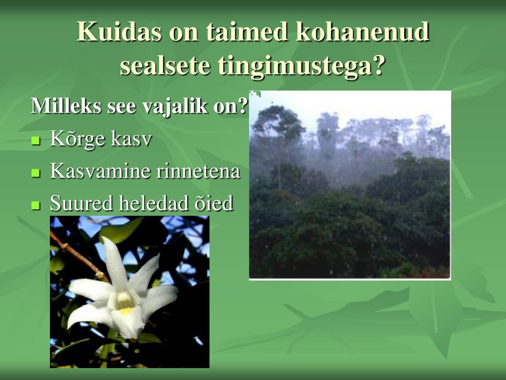 Kuidas on taimed kohanenud sealsete tingimustega?
