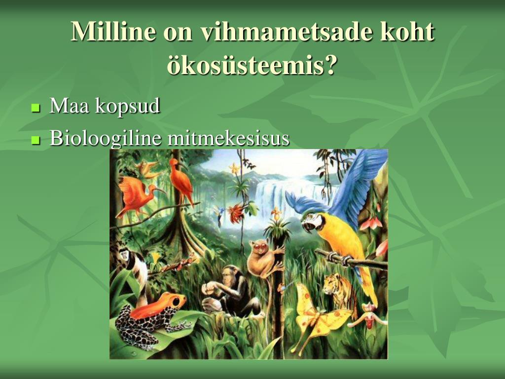 Milline on vihmametsade koht ökosüsteemis?
