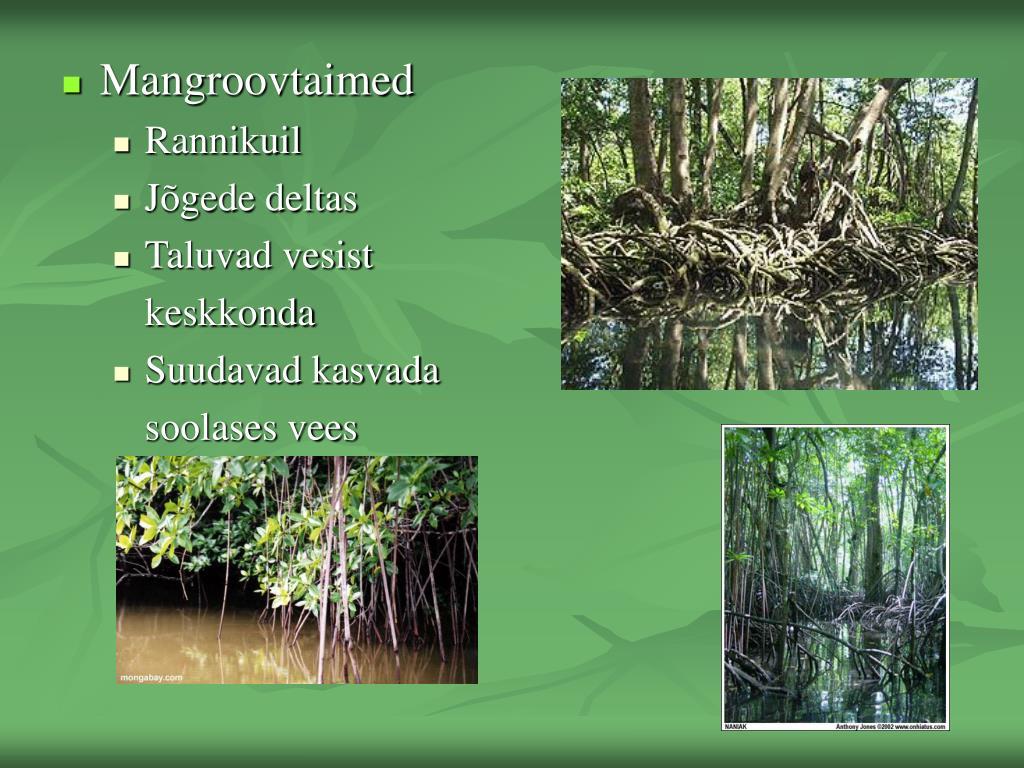 Mangroovtaimed