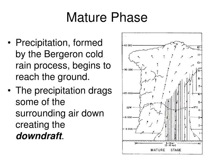 Mature Phase