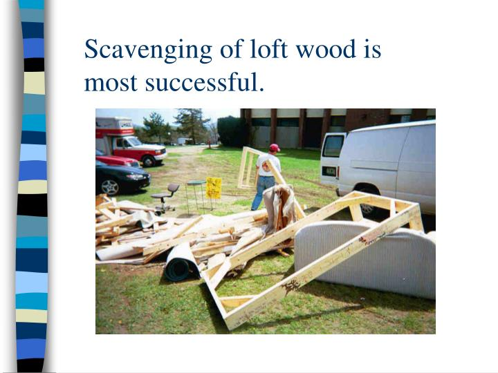 Scavenging of loft wood is most successful.