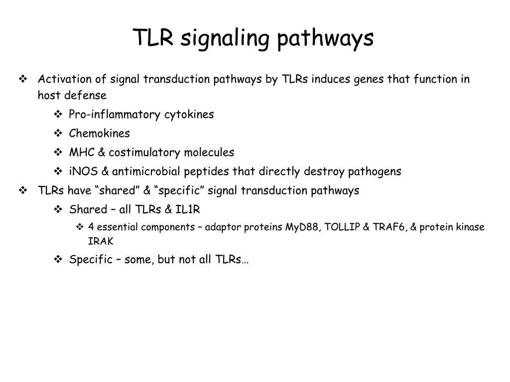 TLR signaling pathways