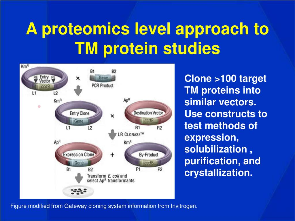 A proteomics level approach to