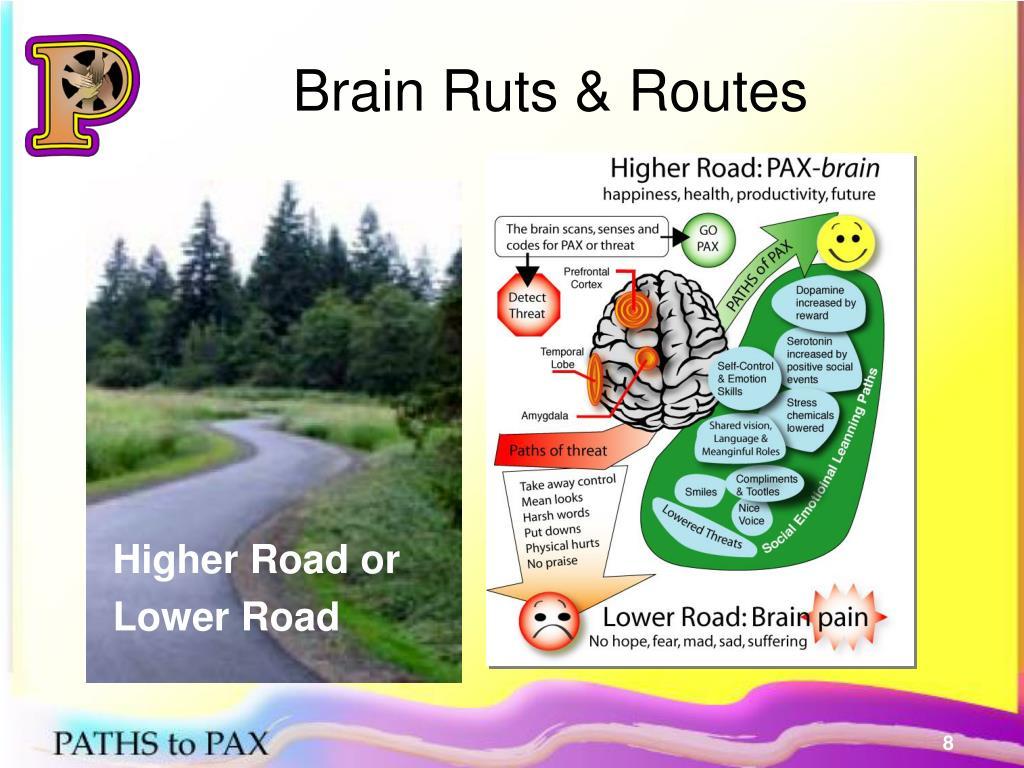 Brain Ruts & Routes