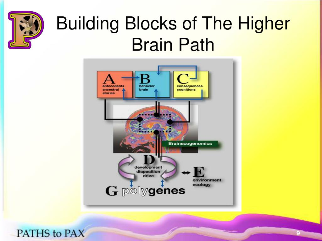 Building Blocks of The Higher Brain Path