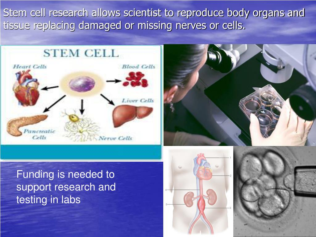 Stem cell research allows scientist to reproduce body organs and tissue replacing damaged or missing nerves or cells.