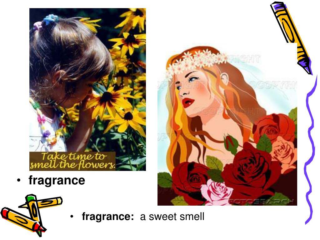 fragrance: