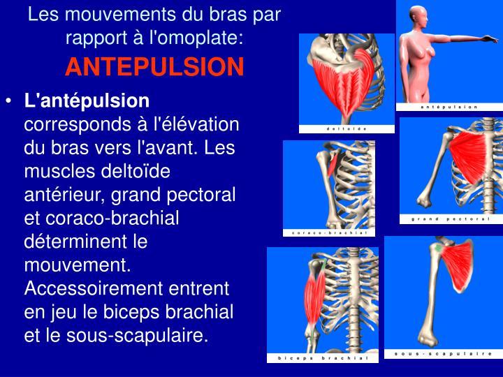 PPT - Les mouvements de l'épaule PowerPoint Presentation