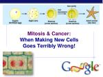 mitosis cancer when making new cells goes terribly wrong