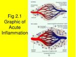 fig 2 1 graphic of acute inflammation