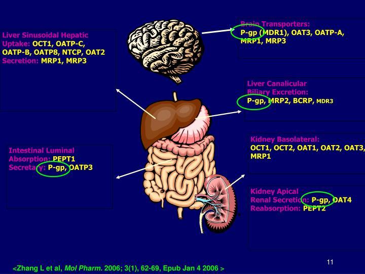 Brain Transporters: