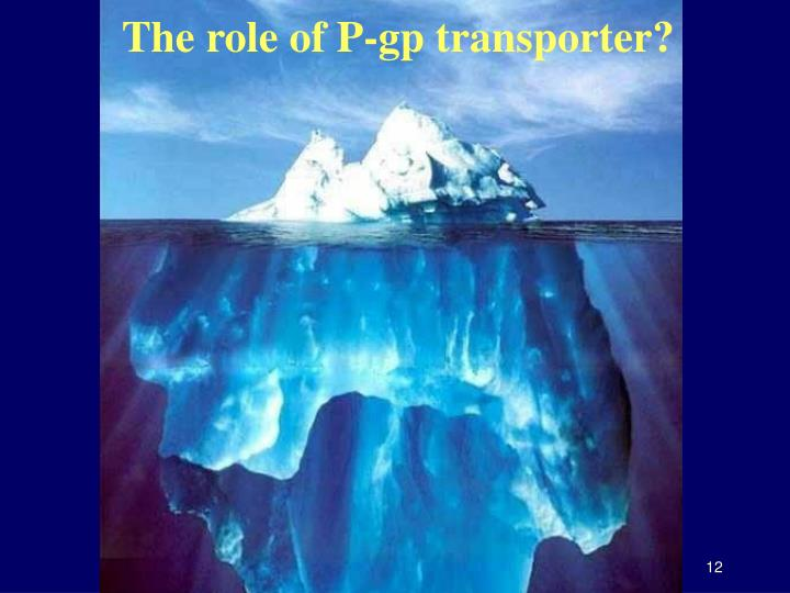 The role of P-gp transporter?