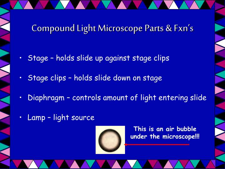 Compound Light Microscope Parts & Fxn's