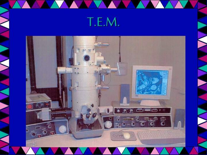 T.E.M.