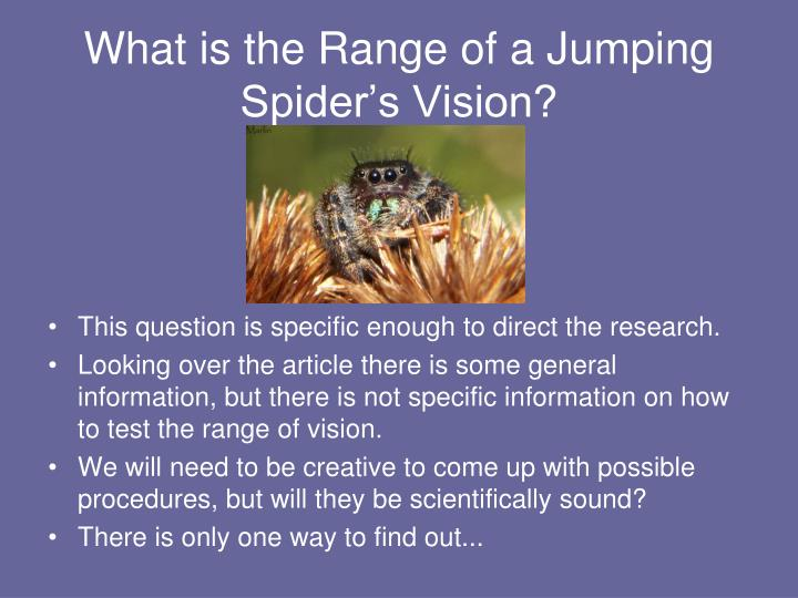What is the Range of a Jumping Spider's Vision?
