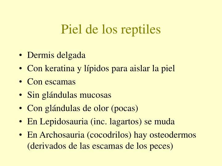 Piel de los reptiles