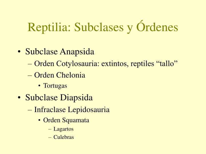 Reptilia: Subclases y Órdenes