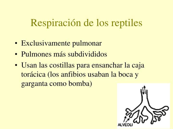 Respiración de los reptiles