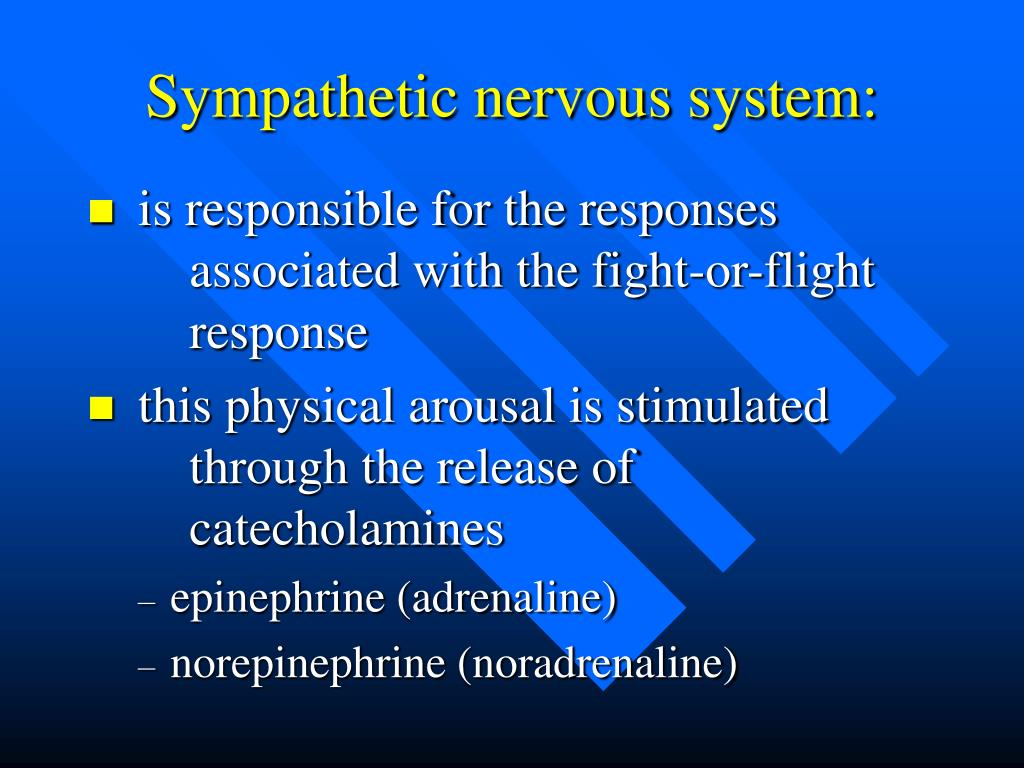 Fight Or Flight Sympathetic Nervous System Pictures to Pin ...