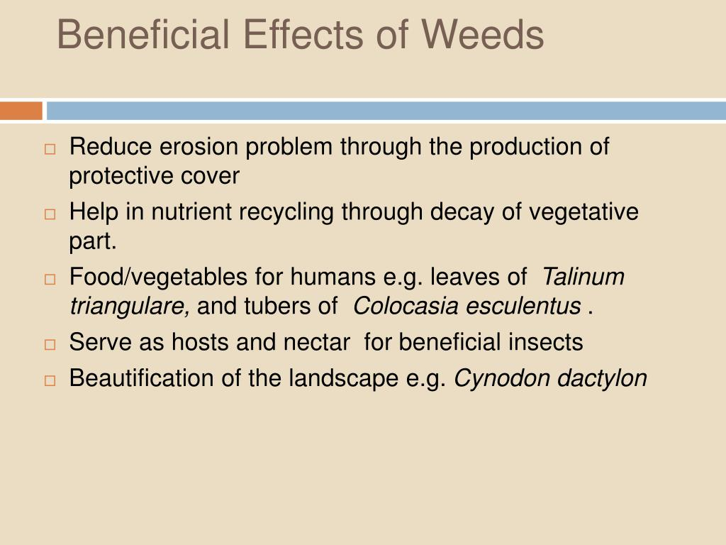 Beneficial Effects of Weeds