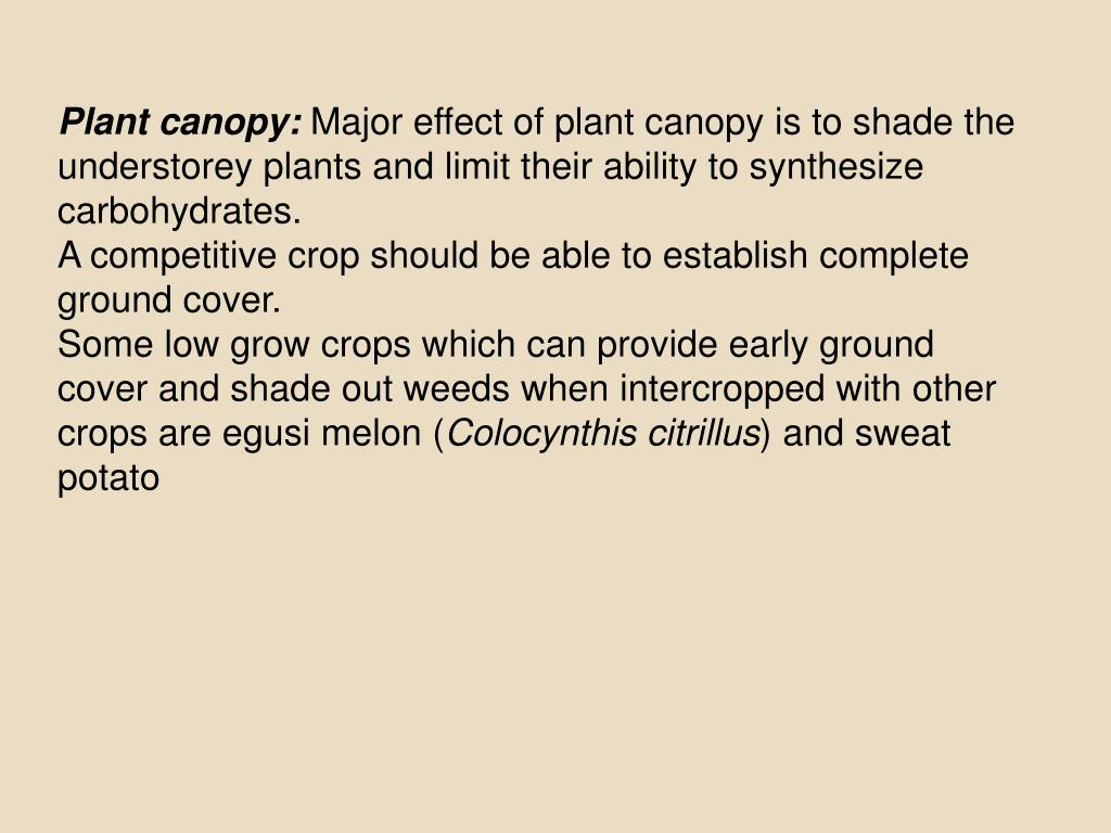 Plant canopy: