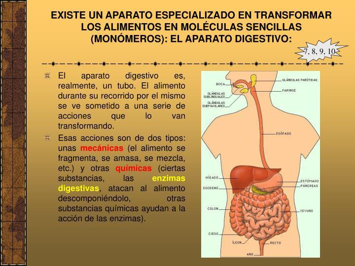 EXISTE UN APARATO ESPECIALIZADO EN TRANSFORMAR LOS ALIMENTOS EN MOLÉCULAS SENCILLAS (MONÓMEROS): EL APARATO DIGESTIVO: